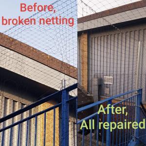 Pigeon repair job